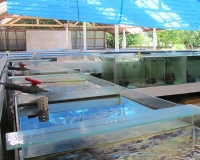 Breeding aquariums