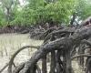pesisir-mangrove-banggai-kepulauan