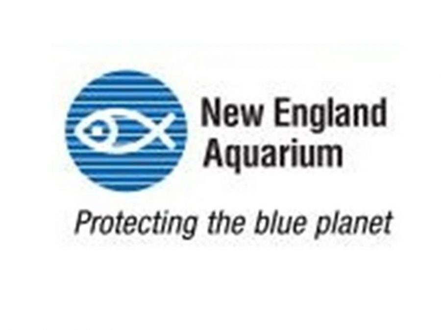 The New England Aquarium