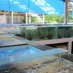 The LINI Aquaculture And Training Centre (LATC)