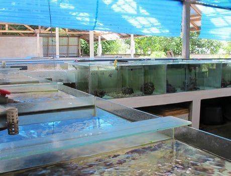 The LINI Aquaculture And Training Centre (LATC)