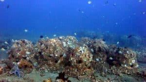 Reef Restoration