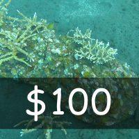Contribute US$ 100