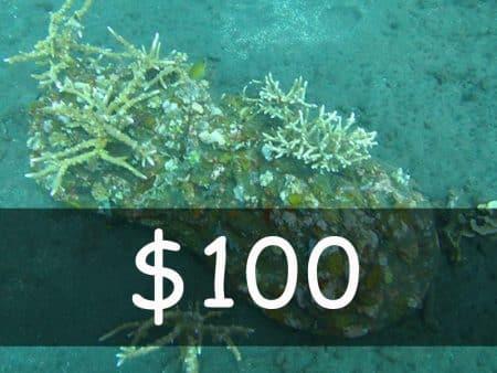 usd 100 for rotibuaya