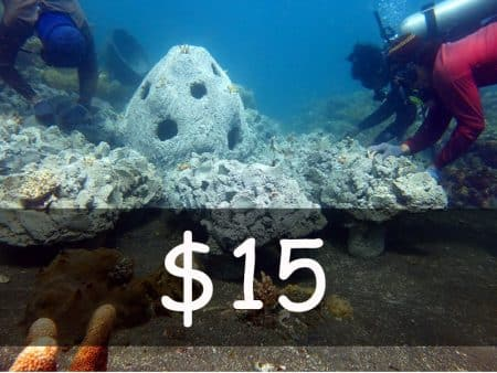 usd 15 for coral planting