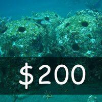 Contribute US$ 200