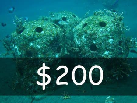 usd 200 for fishdom