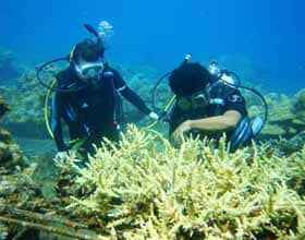 Marine Conservation and Community Spirit in Bali