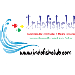 Indofishclub – Indonesia