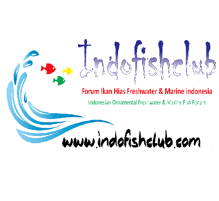 indo fish club