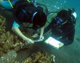 Artificial Reef monitoring at Les village, North Bali