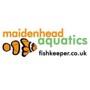 Maidenhead aquatics - fishkeeper