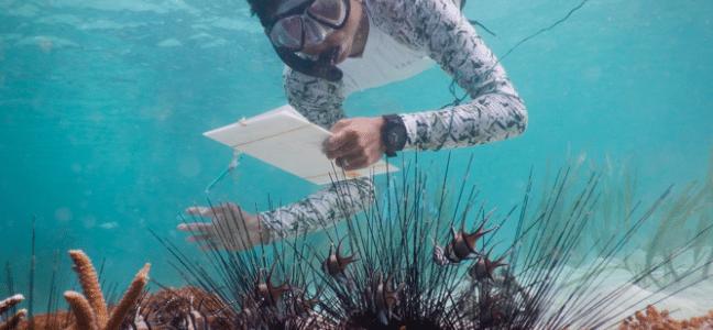 Survey of Banggai Cardinalfish populations and their microhabitats